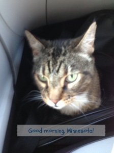 The Cat in Minnesota